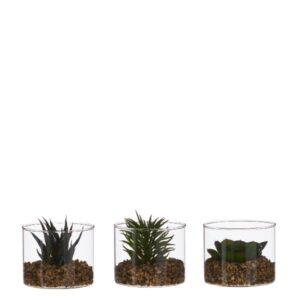 Piantina in vaso art.1047915