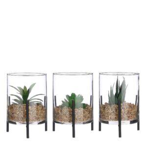 Composizione piante grasse in vaso vetro art.1083171